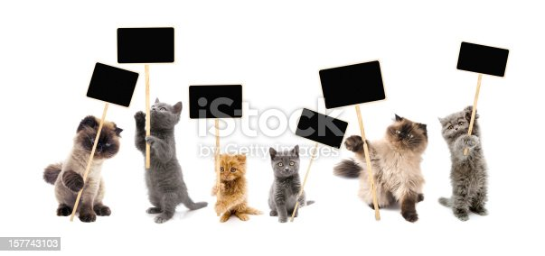 Protesters cats holding picket signs