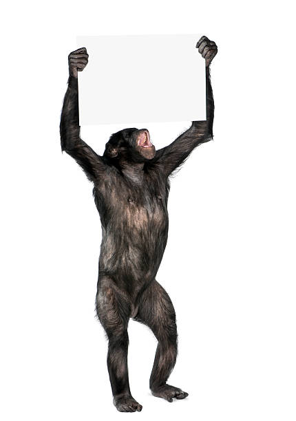 protesting monkey stock photo