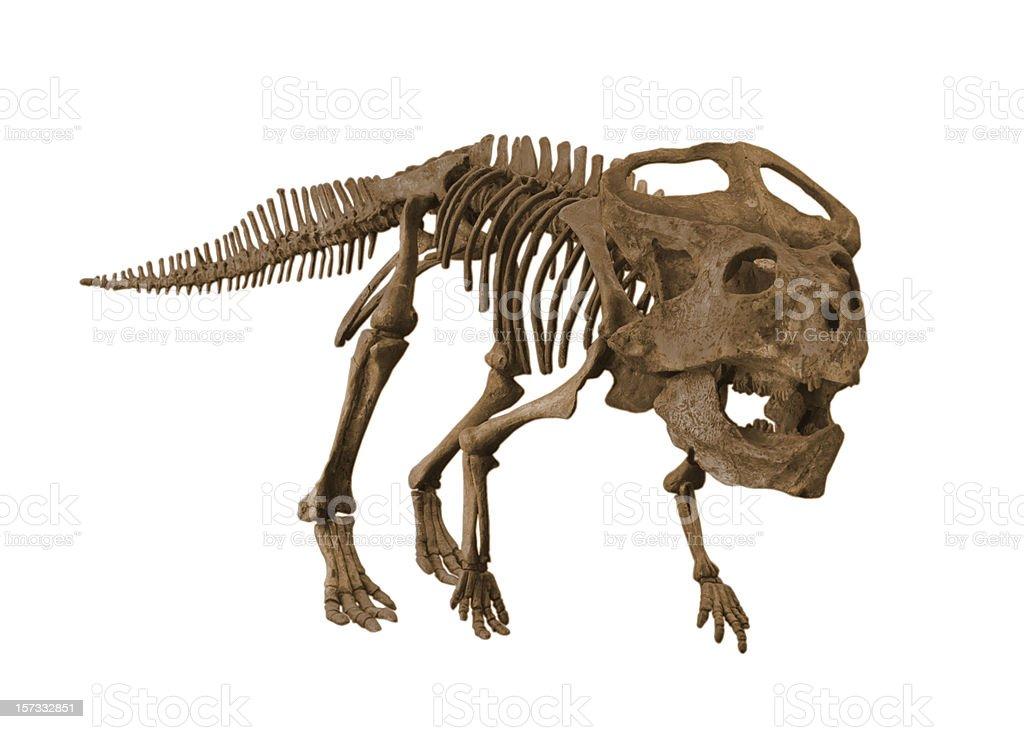 Protoceratops stock photo