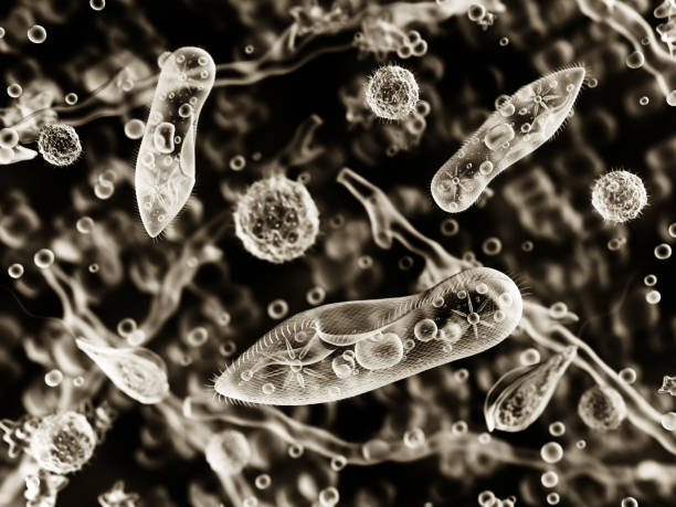 Protozoa, infusoria under a microscope Protozoa, infusoria under a microscope. 3d illustration. protozoan stock pictures, royalty-free photos & images