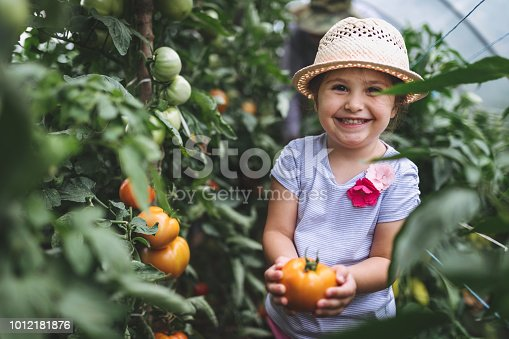 Gorgeous and lovely child in a greenhouse, checking on tomato plants, looking if they are ripe.