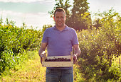 Portrait of proud farmer holds a crate with cherries in his hands and looking at camera
