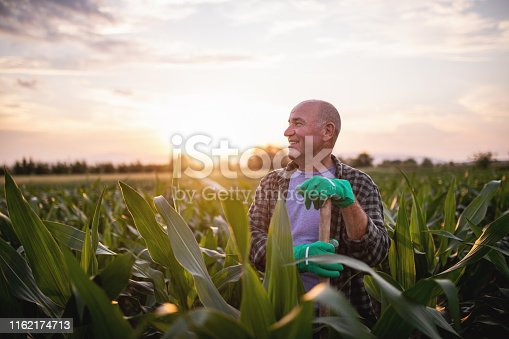 621898406istockphoto Proud farmer looking at his fields 1162174713