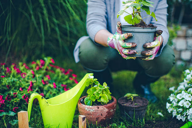 Proud gardener Portrait of mid-adult woman proudly showing her plants  hobbies stock pictures, royalty-free photos & images