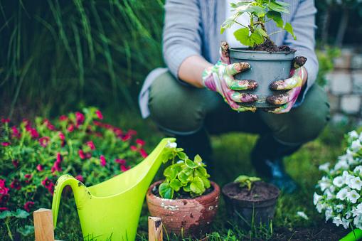 자랑스러운 Gardener 50-59세에 대한 스톡 사진 및 기타 이미지
