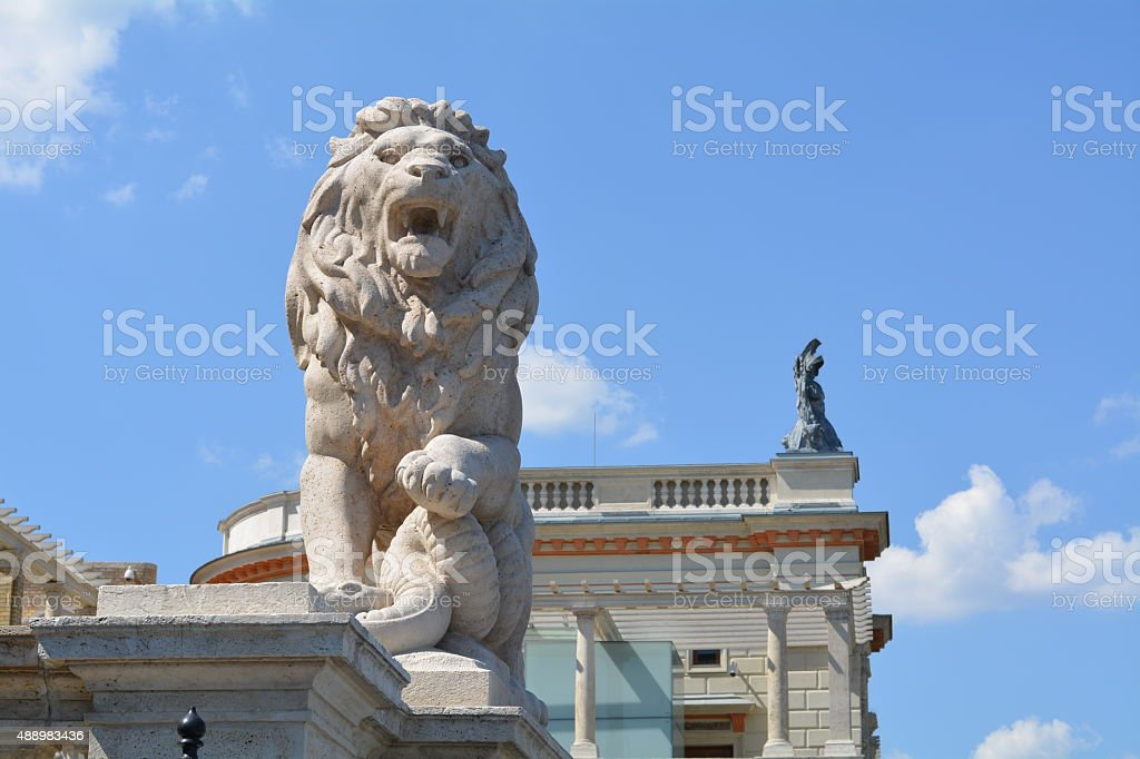 proud lion stock photo