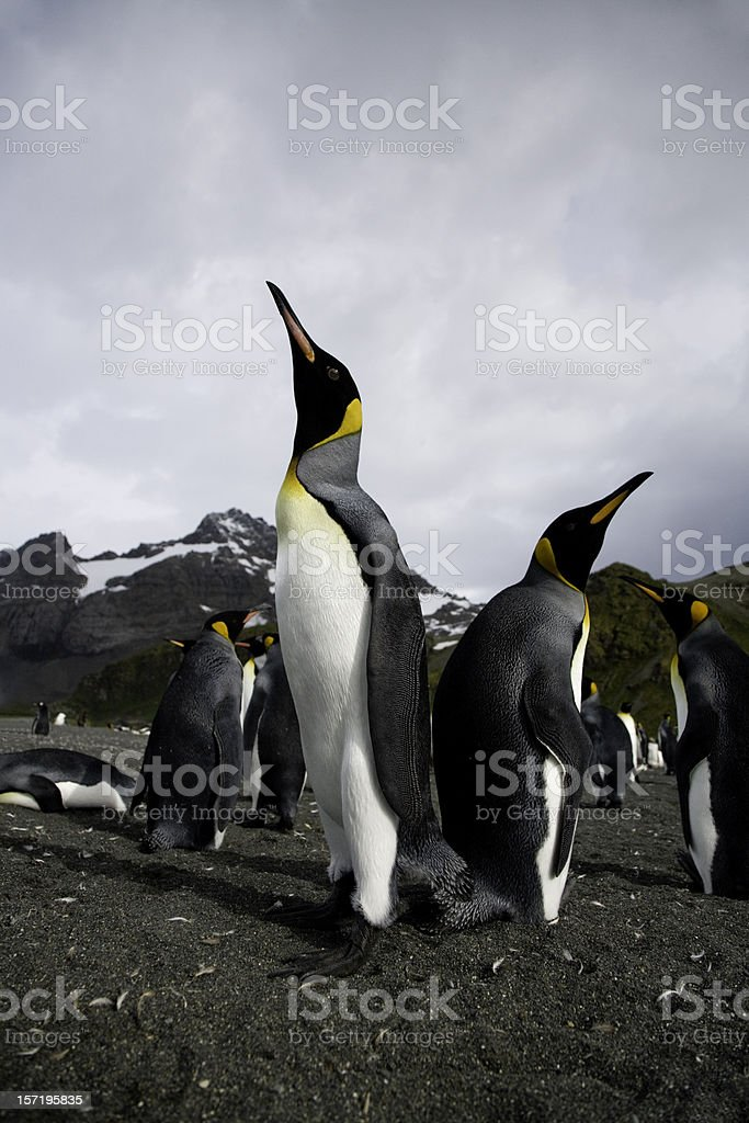 Proudly Posing royalty-free stock photo