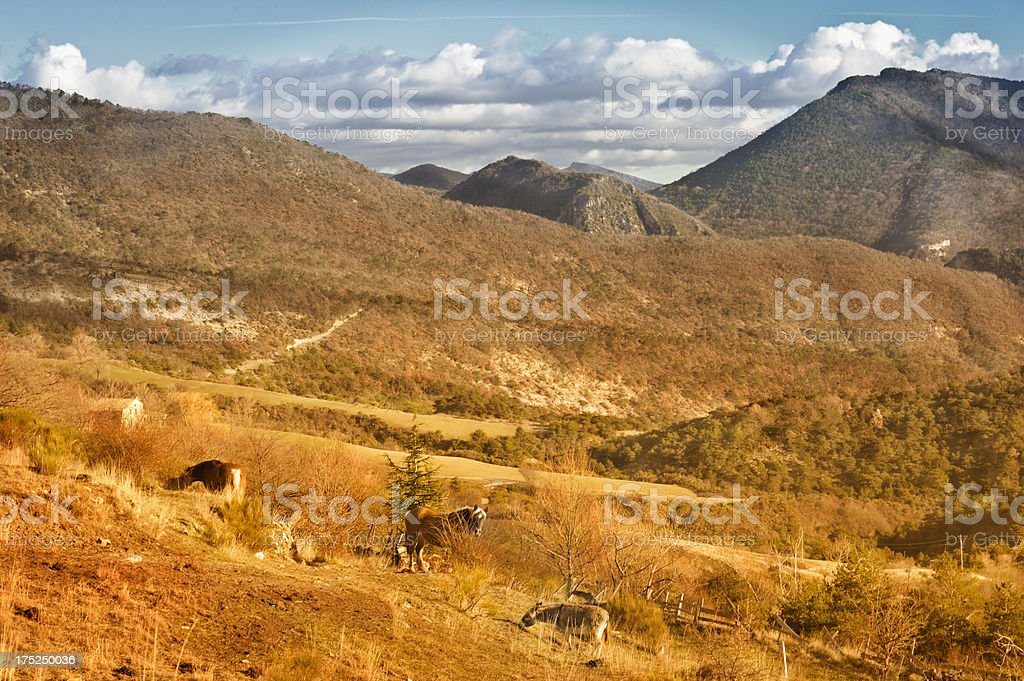 Provencal landscape with horses, France royalty-free stock photo