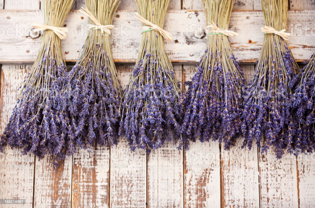 Provence Dried Lavender stock photo