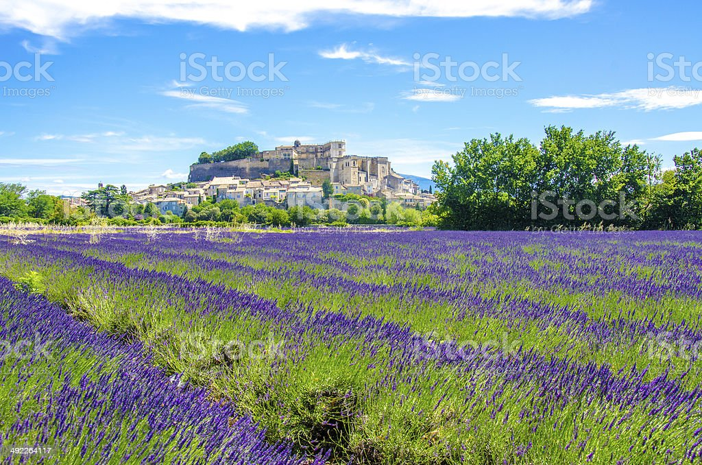 Provence lavender fields in France stock photo