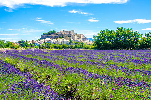 Provence lavender fields in France Summetime enjoying the Lavender season in France, Provence provence alpes cote d'azur stock pictures, royalty-free photos & images