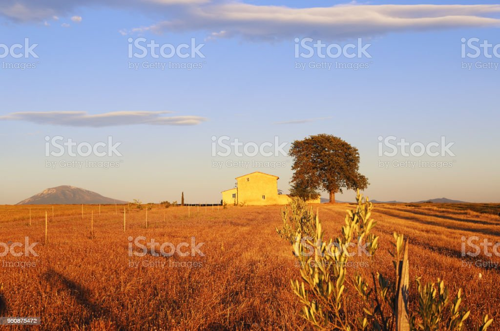 Provence, sloping lavender field at sunset stock photo