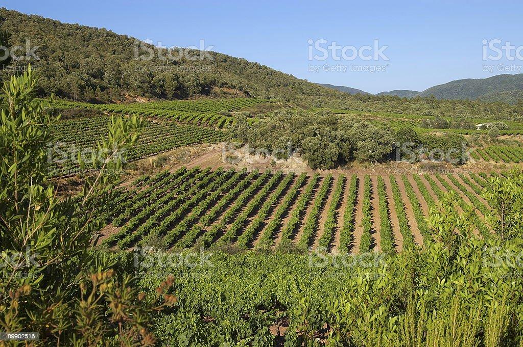 Paisagem de vinha Provence foto de stock royalty-free