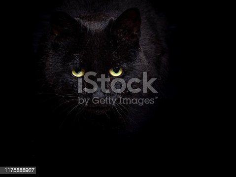 A black cat against a black background