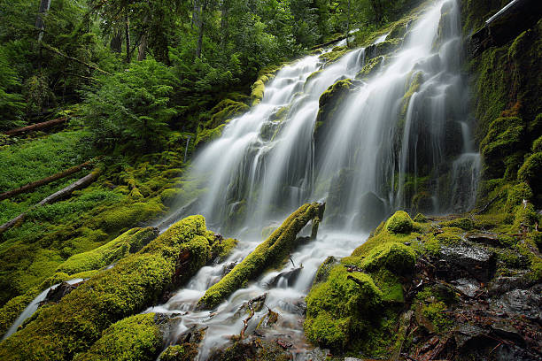 proxy falls, oregon - waterfall stock photos and pictures