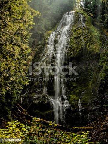 Beautify Proxy Falls surrounded by fir and pine trees