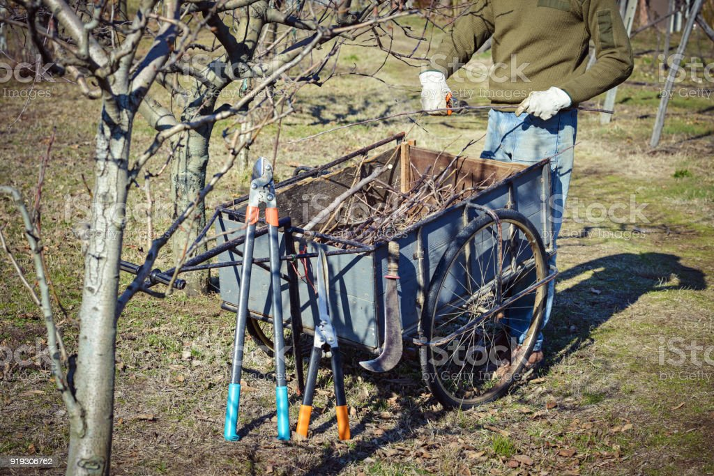 pruner with his tools stock photo