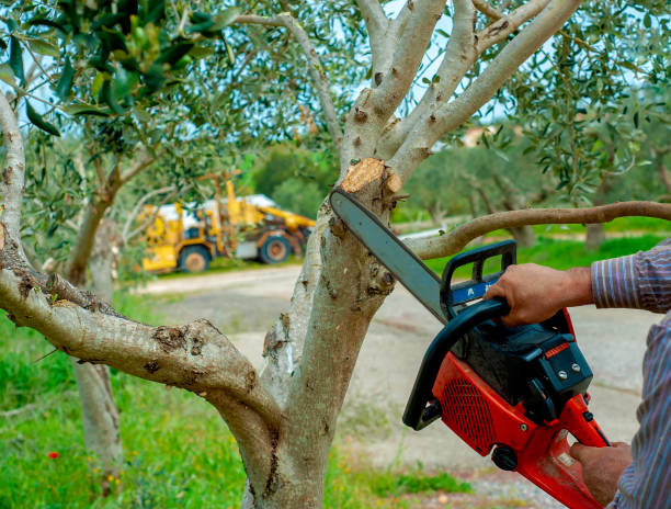 60,216 Tree Service Stock Photos, Pictures & Royalty-Free Images - iStock