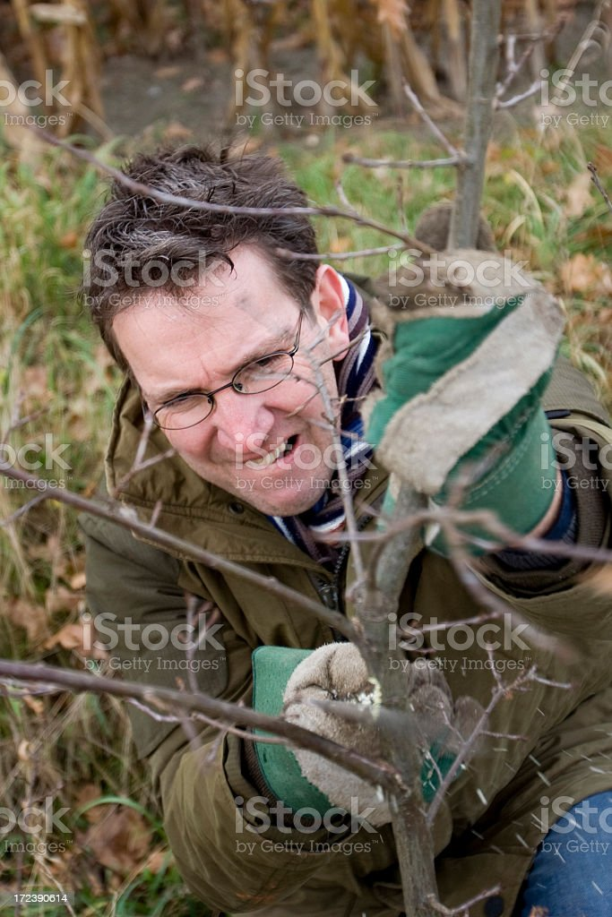 Pruning and sawing royalty-free stock photo