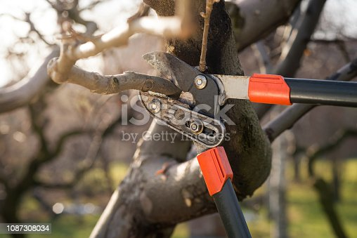 detail of professional pruning shears during winter pruning