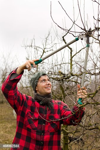 Pruning Fruits Stock Photo & More Pictures of 2015