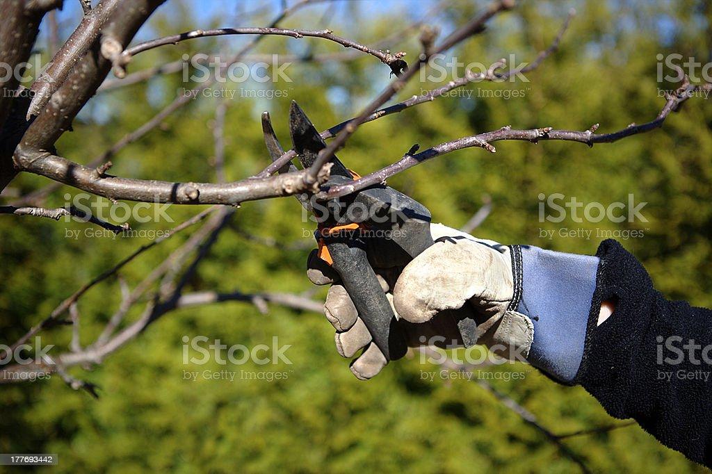 Pruning in the garden stock photo