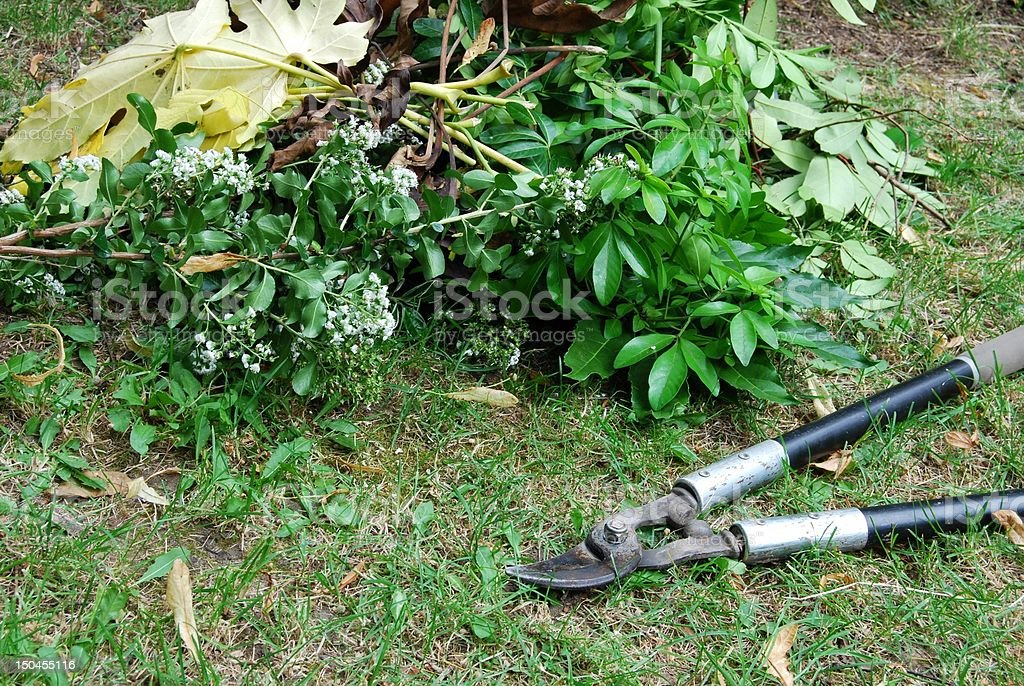 Pruning loppers for gardening and pile of leaves on lawn stock photo