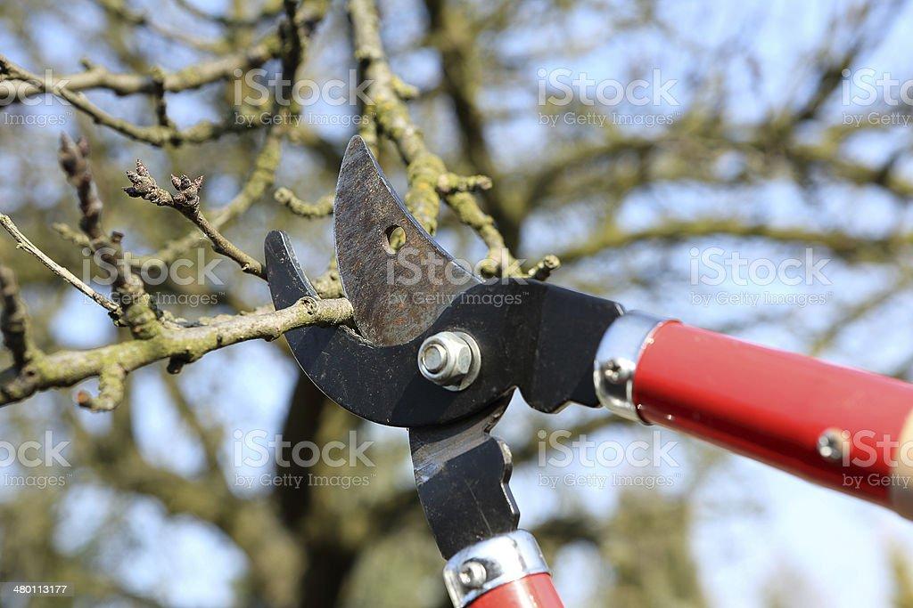 Pruning shears in the garden stock photo