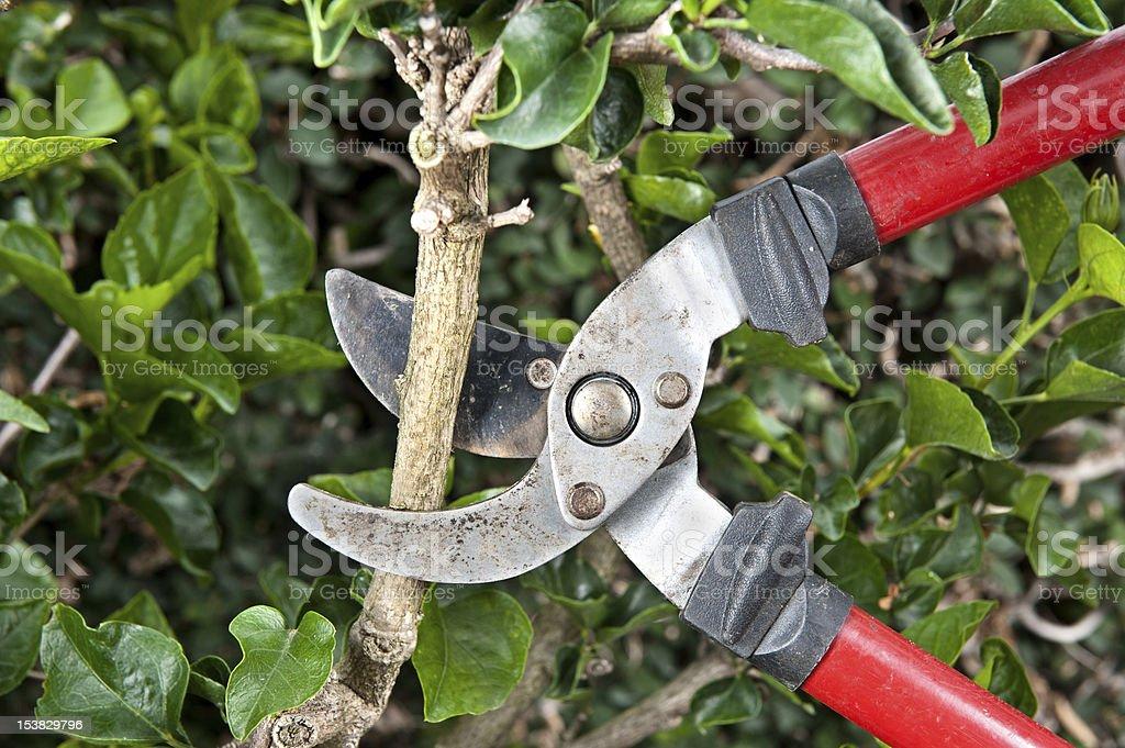 Pruning shears stock photo