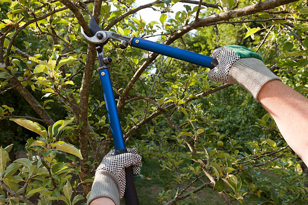 pruning shears - cutter stock pictures, royalty-free photos & images