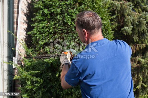 pruning the yew tree in the front yard - for more gardening