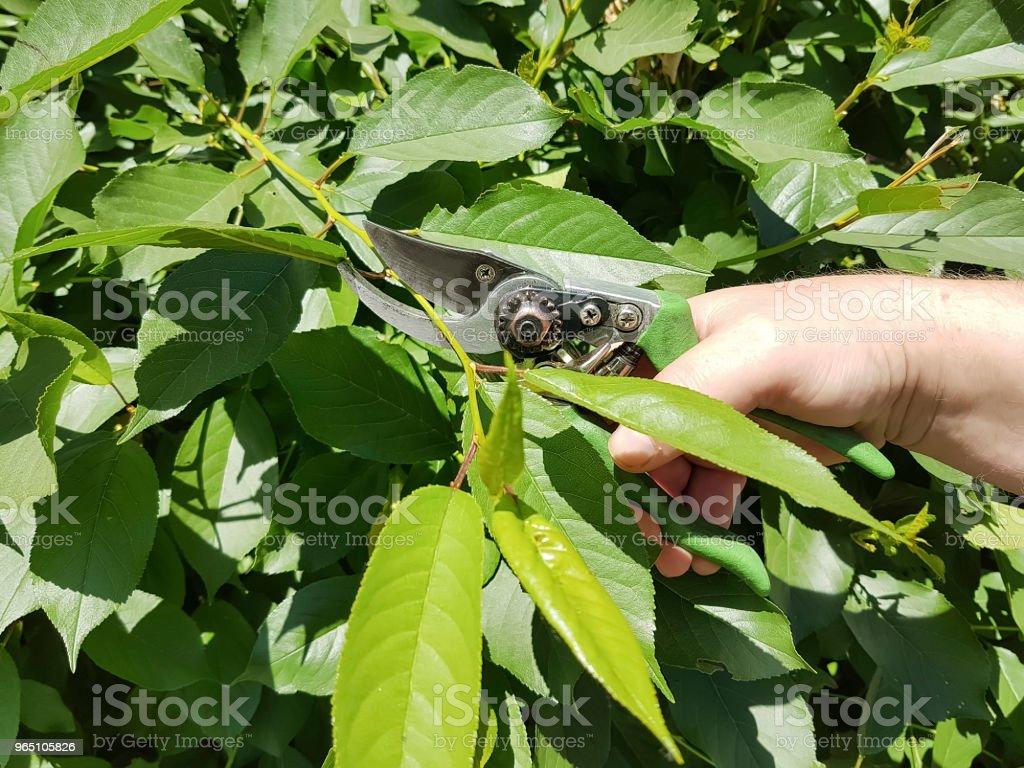 pruning trees, caring for the garden service zbiór zdjęć royalty-free