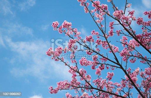 A blue sky and pink petal
