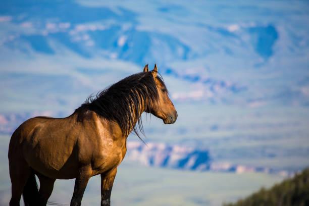 Pryor Mountain Mustangs – Foto