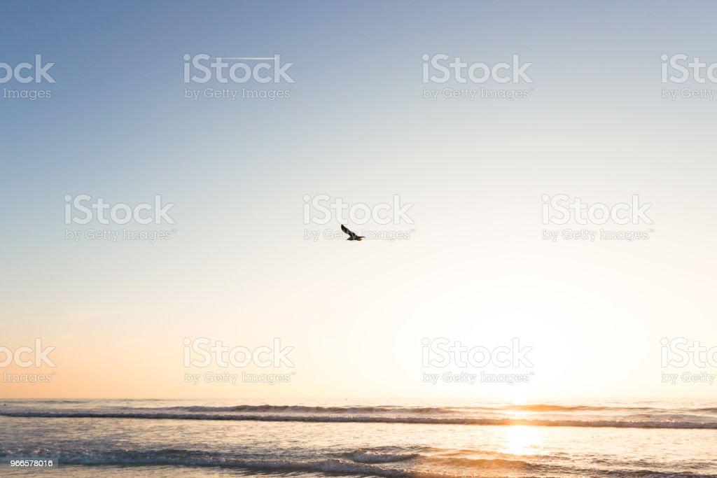 Psalm 104:12 stock photo