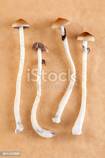 Magic mushrooms. Psychedelic psychotherapy, natural depression and addiction medicine. Entheogens.