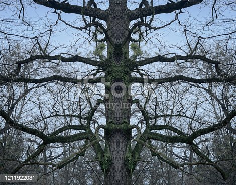 1091817198 istock photo psychedelic tree branches pattern for background 1211922031