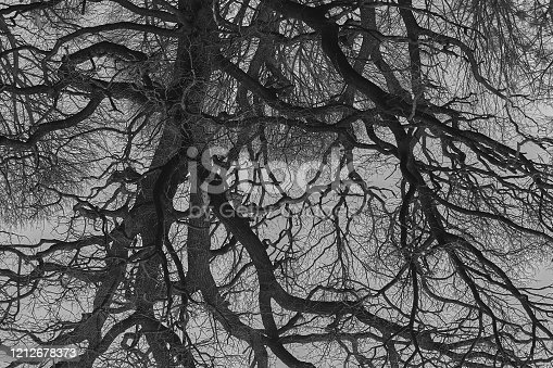 1091817198 istock photo psychedelic tree branches pattern for background 1212678373