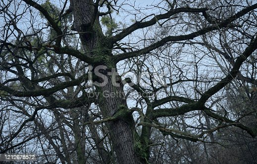 1091817198 istock photo psychedelic tree branches pattern for background 1212678572