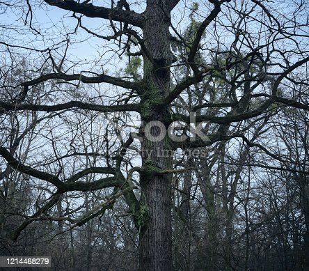 1091817198 istock photo psychedelic tree branches pattern for background 1214468279