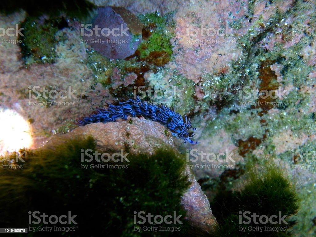nudo branchie asiatico serpente sesso