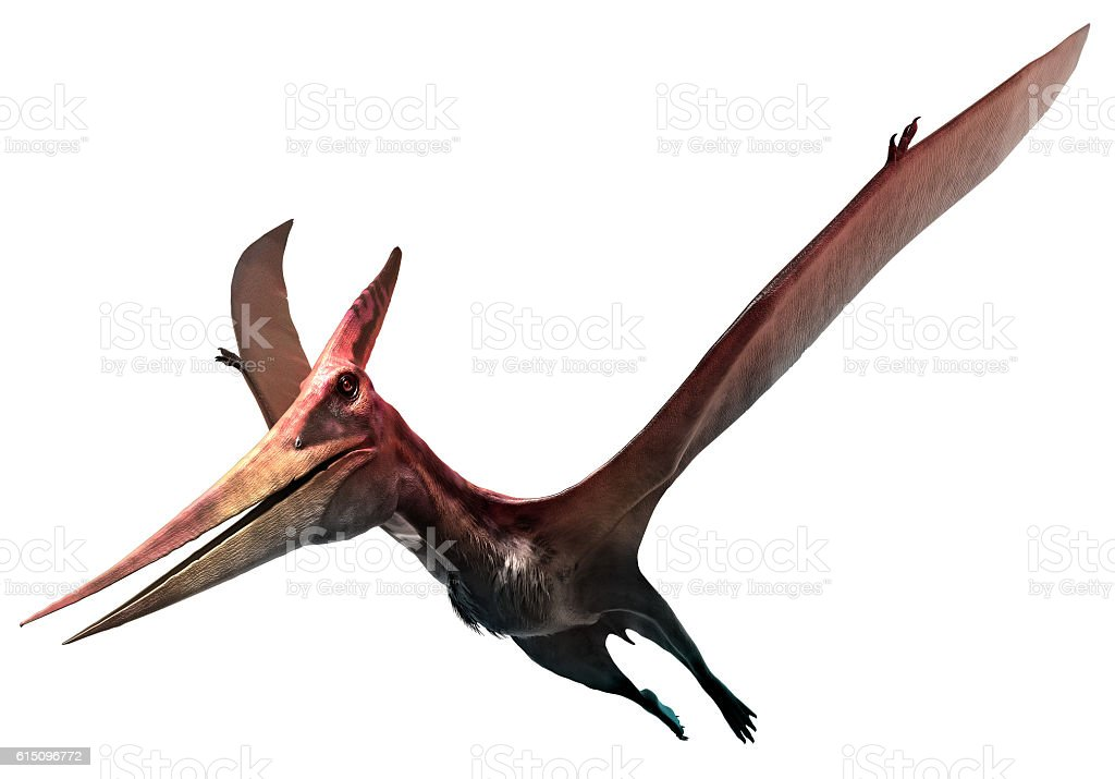 Pteranodon stock photo