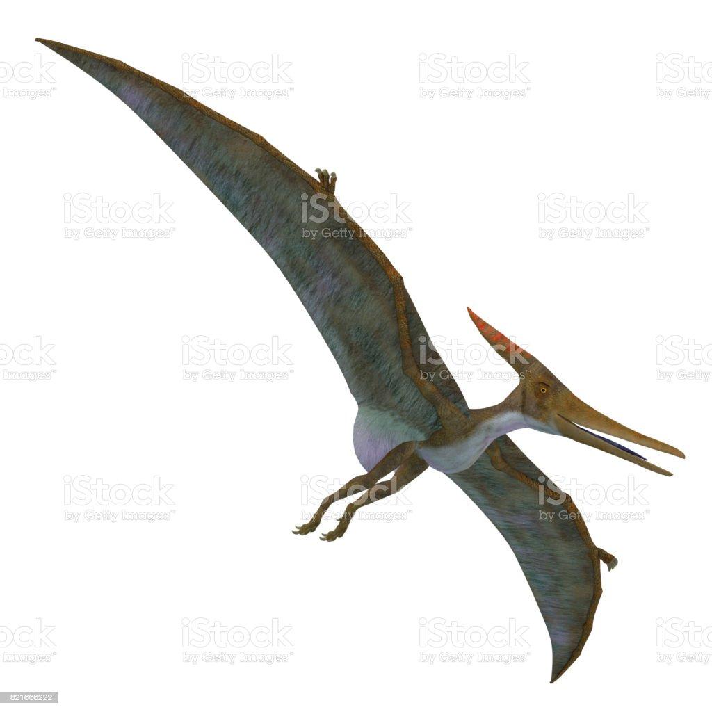 Pteranodon Reptile Soaring stock photo