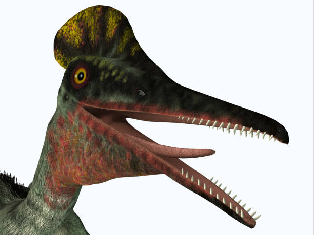 Pterodactylus Pterosaur Head stock photo