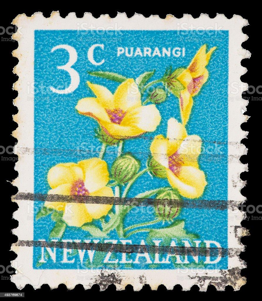 Puarangi Flower Hibiscus Richardsonii On A New Zealand