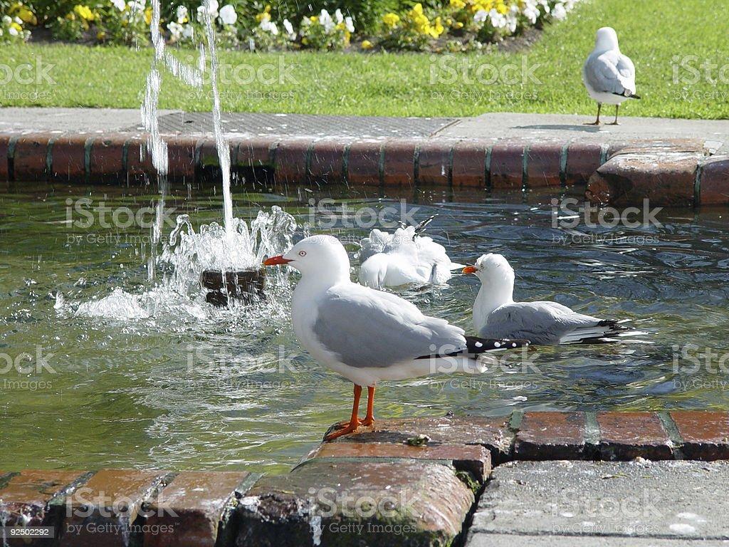 Public (bird) bath royalty-free stock photo