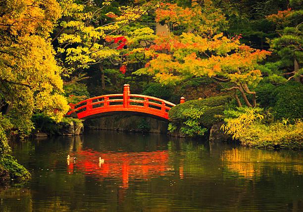 öffentlicher park in tokio - japanischer garten stock-fotos und bilder