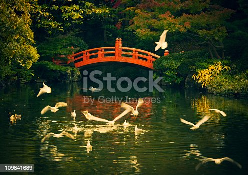 birds flying around in a japanese garden red bridge and pond, public park in tokyo at sunset.