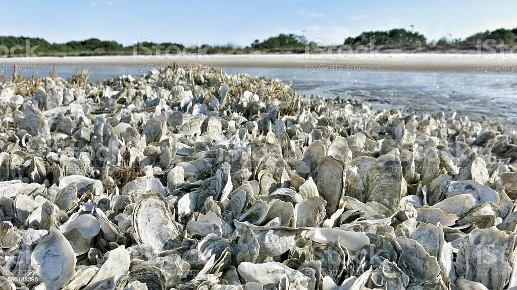 Public South Carolina Beach, Clam, Oyster Shell Bed stock photo
