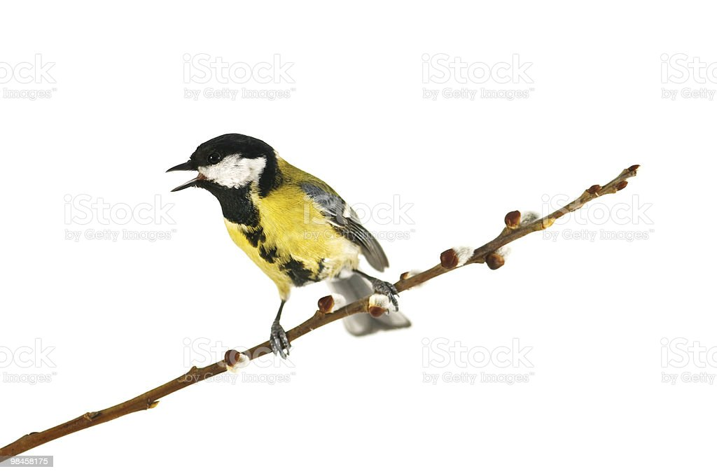 parus royalty-free stock photo